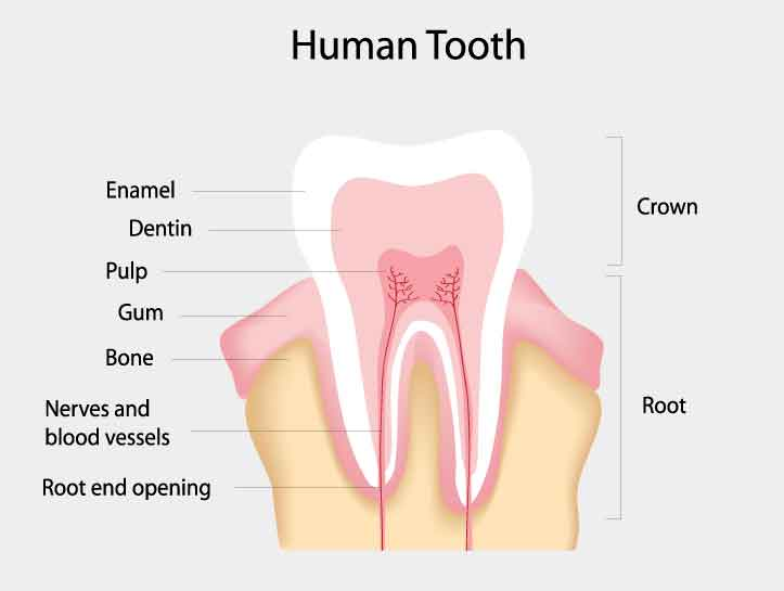 cure tooth decay full pdf